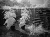 Shot In The Dark.jpg (MStoeckle) Tags: bw pen ir olympus rhodeisland infrared epl2