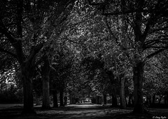 Tree tunnel (WeeBaldMan) Tags: park trees summer white black canon landscape high aperture walk symmetry iso 7d and l series 100 local 24105mm