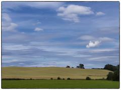 Nannestad: 9. august 2015 (Krogen) Tags: norway landscape norge norwegen akershus romerike krogen landskap nannestad olympusomd