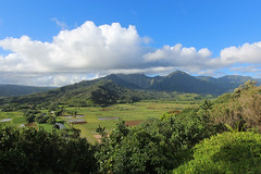 Hanalei Taro Fields (russ david) Tags: hanalei taro fields view landscape kauai hawaii hi september 2016 valley hill field