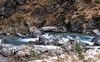 Ciaspolata alla Conca del Prà (gattinoni.foto) Tags: ciaspole concapra jervis sunviso racchettedaneve ciaspolate escursioni