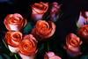 DSC_4246 Roses (PeaTJay) Tags: nikond750 reading lowerearley berkshire macro micro closeups gardens indoors nature flora fauna plants flowers bouquetofroses rose roses rosebuds