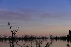 2016.11.18.05.23.28-Dawn on Lake Menindee (www.davidmolloyphotography.com) Tags: newsouthwales darlingriver menindee kinchega kincheganationalpark lakemenindee dawn lake
