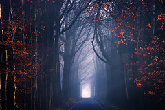 The Last Leaves (albert dros) Tags: autumn lane road tree dark forest spooky dutch winter moody atmosphere albertdros thenetherlands path