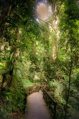 Encore - Chasing the sun (Josué Godoy) Tags: sol soleil sun vert verde green chemin path camino árboles arbre trees