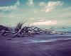 Aquamarine (Tony__K) Tags: crowngraphic 4x5 vericolor 4111 duplicating fim ishootfilm iso5 hc110b c41 reversal 90mm superangulon largeformat lf kodak boneyard florida bigtalbot island o