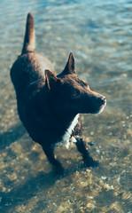 DSC00614 (majoradair) Tags: dog dogs port melbourne beach summer chewie