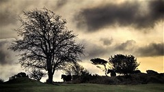 Ponies at Bicknoller Post (OutdoorMonkey) Tags: pony ponies horse silhouette quantocks quantockhills somerset bicknollerpost cloud stormy sky skies winter countryside tree rural nature natural outside outdoor
