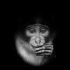 Baby monkey - LK (asterix_93) Tags: portrait eyes monkey white child face black baby key low nikon d810