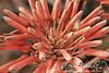 Macro (Gaditana93) Tags: macro flora red rojo canon400d gaditana93 maríadelcarmendelgadomaline pruebamacro luz constraste flor planta plant