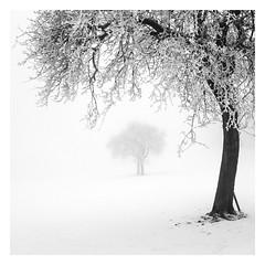 Im Arm der Kälte (ArztG. Photo) Tags: winter tree trees snow fog mood love fine art austria atmosphere arztg photo myfavs