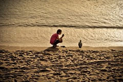Girl vs gull (Vincent Buuron) Tags: beach girl bird rencontre seagull gold light cannes alps france europeonflickr sand sunlight dreamily youth photographer young beautiful art ambiance atmosphere