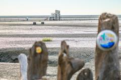 (Digital_trance) Tags:     oyster  seafood ship   ocea sea  sunset sunrise    taiwan  lanscape  nature  windmill star      bird bif   sparrow  landscape  clam   cloud   venus  jupiter moon    changhua changhuataiwan