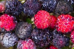 Real Deal Psychodelia - Tropical Close-Ups (ArneKaiser) Tags: macro closeup hawaii berries dof maui depthoffield