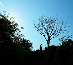 The photographer (Hilary Causer) Tags: summer silhouette photographer july bluesky deadtree herefordshire papercut wigmorecastle