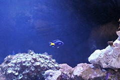 under the sea (Marked_man) Tags: life blue sea fish yellow coral rock one neon bright formation single scales aquatic anemonae