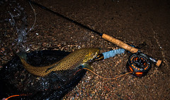"Nightfishing • <a style=""font-size:0.8em;"" href=""http://www.flickr.com/photos/43699293@N07/20136458730/"" target=""_blank"">View on Flickr</a>"