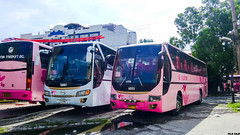 Granbird or Premium? (rnrngrc) Tags: auto golden dragon phi florida body transport line renault replica valley series kia ilocos hino premium inc gd cagayan laoag generic norte pilipinas marcopolo rm gv grandeza kamias cvl neoplan p11 sampaloc tourliner granbird p11c rm2p xml6127 p11cth rm2pss gd33 gvfti gd97