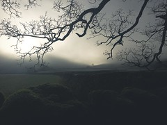 Misty (james_drury) Tags: arncliffe misty must foggy cold dales yorkshire iphone branches atmospheric freezing explored iphoneography mood moody apple 6s