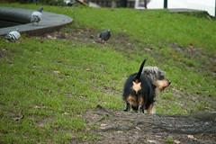 Mimicry (RaminN) Tags: dog mimicry portland oregon usa