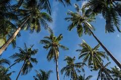 161117_Philippines_0088.jpg (Frank Schwellnus) Tags: palawan reise tao philippinen 5daytrip philippines travel taophilippines elnido mimaropa ph