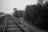 Tracks to the Fog (MichaelaSMillion) Tags: track rail rails railroad black white grey contrast contrasting blackandwhite railroadtracks mist fog foggy misty unclear clarity mystery morning dew