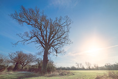 'Wymondham in January' (Jonathan Casey) Tags: nikon d810 samyang 14mm f28 norfolk countryside wymondham trees landscape farmland