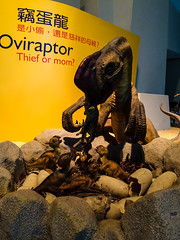 Oviraptor (roamingtummy) Tags: taichung taichungcity taiwan tw theroamingtummy nationalmuseumofnaturalscience travel museum oviraptor