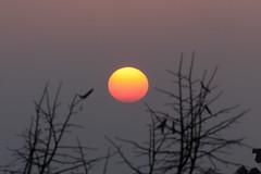 Sunset and fog (flubatti) Tags: