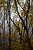 Fog (Bloui) Tags: 2016 eos7d montroyal mountroyal mountroyalpark november parcdumontroyal montréal québec tree fog lines yellow
