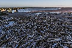 Razor Fish Shells (joanjbberry) Tags: newbrighton wallasey merseyside coast coastline sea water beach sand landscape razorshells