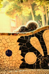 tête-à-tête (AlessandroDM) Tags: barcellona parcguell antonigaudi gaudi spagna spain espana catalunya catalogna