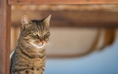 kittens (32) (Vlado Ferenčić) Tags: kitty kittens catsdogs cats animals animal animalplanet zagorje hrvatska hrvatskozagorje nikond600 croatia nikkor8518