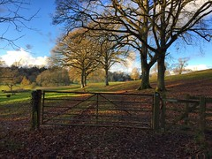 Hangers Way (Marc Sayce) Tags: tree gate fence path east worldham hampshire south downs national park hangers way winter january 2017