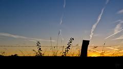 Rural Sunset Scene (lloriquita1) Tags: ngc sunset sun sunny colors silhouette sky shadow rural clouds cloudporn blue colorful black landscape landschaft bestshot bestphoto mood moody plants scene land rusticana romantic sunrise field