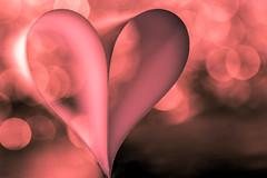 Love ... so strong, so powerful .... so fragile (Loving and HMM !) (ralfkai41) Tags: makro liebe justwhitepaper rosa weich romantisch romantic macromondays heart bokeh herz love mystisch wow
