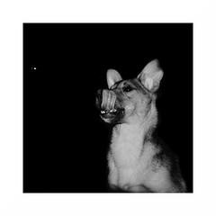 Frodo (Martin_mmmm) Tags: bw border gimp rawtherapee münster dog animal minimal simple