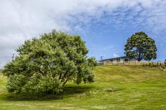 These trees look like a painting to me (firstfire53) Tags: australia tasmania waratah