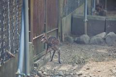 (igu3) Tags: japan deer nara