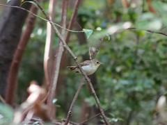 (Polotaro) Tags: bird nature pen olympus  zuiko  5     fzuiko300mmf45 epm2