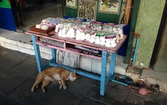 Out For The Count (jcbkk1956) Tags: street sleeping cat table thailand ginger feline bangkok newspapers stall step thai snacks resting thonglo iphone5