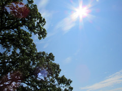 sun with oak (quirkyjazz) Tags: oaktree lonetree oldoak thattree plattevillewisconsin