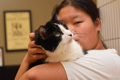 Marshall Fields (Save-A-Pet Adoption Center) Tags: senior female cat blackwhite volunteer marshallfields returned 2015