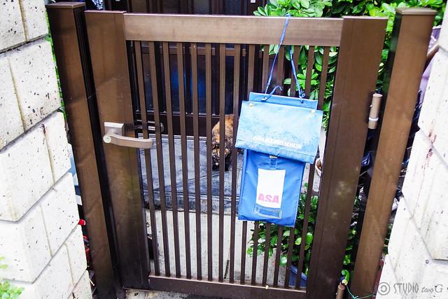 Today's Cat@2015-07-11