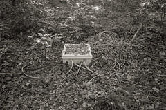 cables at forest (Takeshi Nishio) Tags: devno237 minoltatc1b 落葉 ilfordhp5plus ネガ フィルム filmno1027 金沢城 白黒 ei800 id111120deg165min ケーブル 28mm