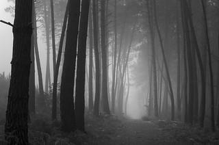 Arbres et brouillard - Explore (10/12/2016)