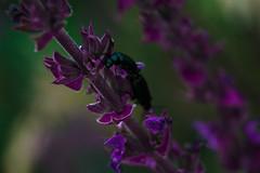 Untitled (Нóженко Екатерина) Tags: macro macrophoto flower flowers purple lilac white green bug nikond7100 nikon 50mm 50mm18 nikon50mm