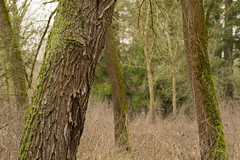 20170104-_IMG0946-Edit (fleetingphotons) Tags: pentaxk1 smcpentaxa200mmf28ed wasingestate fishing warrenbeat kennet trees