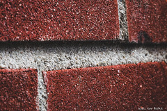Monday,  Member's Choice: Inspired by a Song (-+Niels+-) Tags: macromondays macro bricks inspiredbyasong racoon music wall building lines canon 70d 100mmf28l mondays hmm challenge brick cement stones textures
