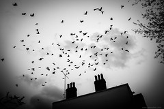Hitchcock frame (jrockar) Tags: birds london bw mono blackandwhite pigeons sky roof noir x100s fuji jrockar janrockar idiot surreal abstract hitchcock frame decisive nonhuman street streetphoto